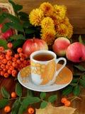 秋天收获花楸浆果、苹果和叶子之前围拢的一杯茶  免版税库存图片