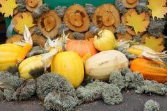 秋天收获静物画用南瓜、玉米、青苔和木背景 免版税库存图片