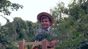 秋天收获,草帽的小男孩运载用不同的新鲜蔬菜的木条板箱在庭院背景  股票视频