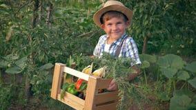 秋天收获,草帽的快乐的男孩在有新鲜蔬菜的手箱子举行在庭院 影视素材