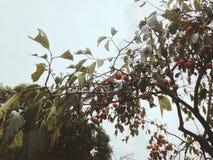 秋天收获,辛苦,美好的秋天天喜悦  免版税库存图片