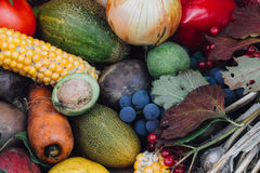 秋天收获水果和蔬菜 图库摄影