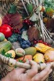 秋天收获水果和蔬菜 免版税图库摄影