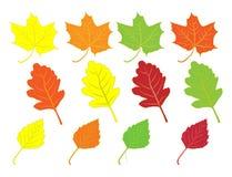 秋天收集五颜六色的叶子 免版税图库摄影