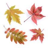 秋天收集五颜六色的叶子 库存图片