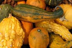 秋天收集五颜六色的市场南瓜 免版税库存照片