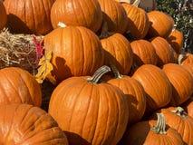 秋天收集五颜六色的市场南瓜 免版税图库摄影