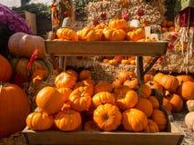 秋天收集五颜六色的市场南瓜 库存图片