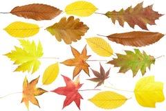 秋天收集叶子 免版税库存图片
