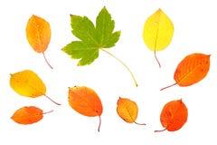 秋天收集叶子 库存照片