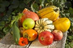 秋天收集果菜类 免版税图库摄影