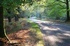 秋天新推进的森林 库存照片