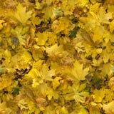秋天无缝的样式背景 免版税库存照片