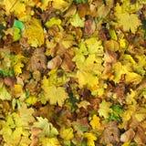 秋天无缝的样式背景 图库摄影