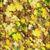 秋天无缝的样式背景 库存照片