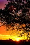 秋天日出在英国 免版税库存图片
