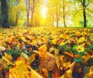 秋天日在公园 免版税库存照片