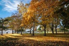 秋天日在公园 免版税图库摄影