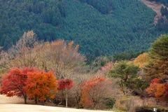 秋天日本人横向 免版税库存照片
