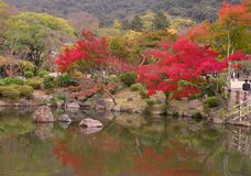 秋天日本人池塘 库存照片