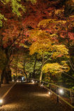 秋天日本庭院在晚上 免版税库存图片