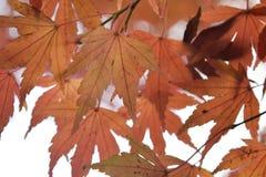 秋天日本 库存照片