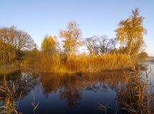 秋天日湖晴朗的木头 免版税库存图片