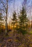 秋天日落在捷克乡下 库存照片