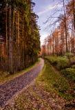 秋天日落在森林里在捷克 库存照片