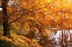 秋天日落森林风景 库存图片