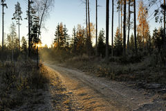 秋天早晨在森林里 免版税图库摄影
