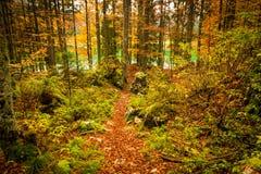 秋天早晨在阿尔卑斯 免版税库存图片