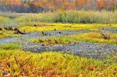 秋天早晨沼泽- Loeminster, Ma 2014年10月-埃里克L 约翰逊摄影 免版税图库摄影