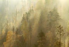 秋天早晨薄雾在taiga森林,库萨莫,芬兰里 库存图片
