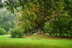 秋天早期的公园 免版税库存图片