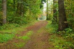 秋天早期的公园 库存照片