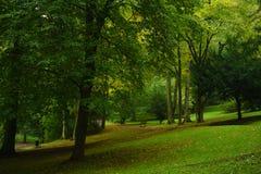 秋天早期的公园 免版税库存照片
