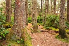秋天早期的森林俄国线索 免版税图库摄影