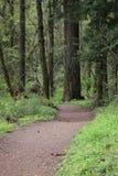 秋天早期的森林俄国线索 库存照片