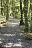 秋天早期的森林俄国线索 库存图片