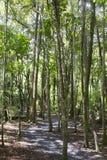 秋天早期的森林俄国线索 免版税库存图片