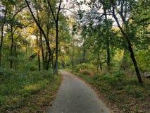 秋天早期的森林俄国线索 图库摄影