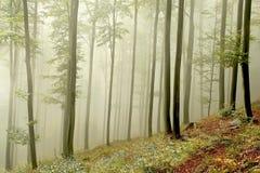 秋天早期的森林早晨发出光线星期日 免版税图库摄影