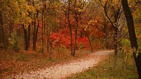 秋天时间在森林 免版税图库摄影