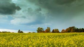 秋天时间在雨前的油菜籽领域 免版税库存图片