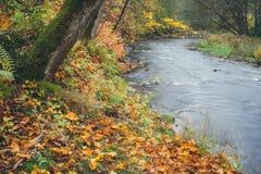 秋天时间生动的河岸 库存图片