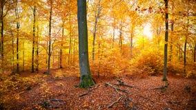 秋天时间的五颜六色的森林地 免版税图库摄影
