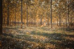 秋天时间的森林 免版税库存照片