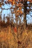 秋天时间 在干草的Obweb spiderweb 免版税库存照片
