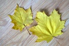 秋天时间 天气 自然 叶子 划分为 一起两片叶子 黄色,红色,橙色 照亮 9月10月 季节 干燥 de 库存图片